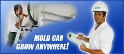 Mold-Can-Grow-Anywhere.jpg